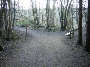 The_Green_Bridge_Trail,_Chatelherault_Country_Park_-_geograph.org.uk_-_134286